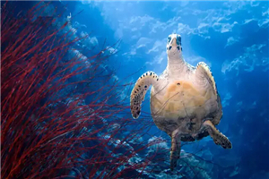 印尼苏门答腊岛龙鱼_印度尼西亚最佳潜水点:科莫多,班达岛,瓦卡托比,韦岛 - 攻略